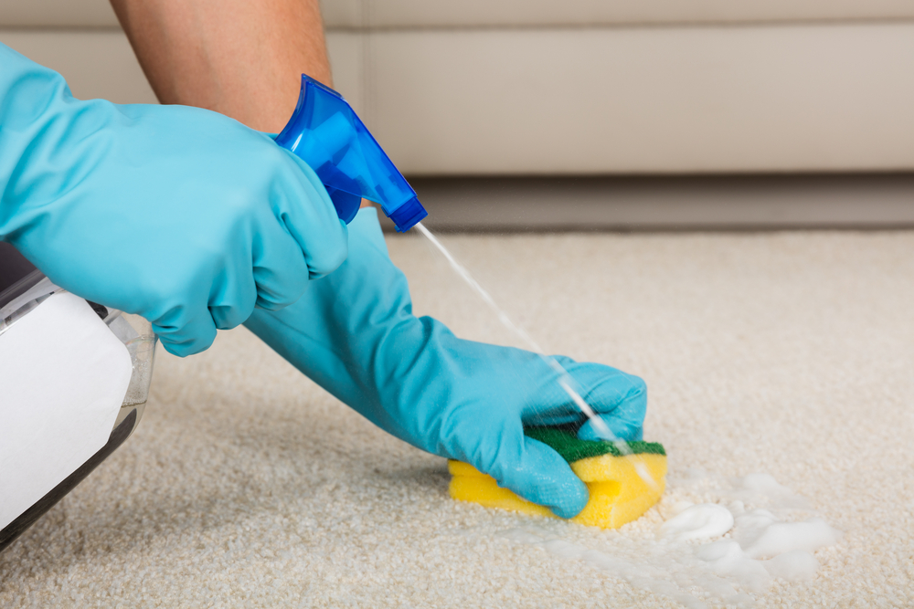 femme de menage nettoie une tache sur un tapis